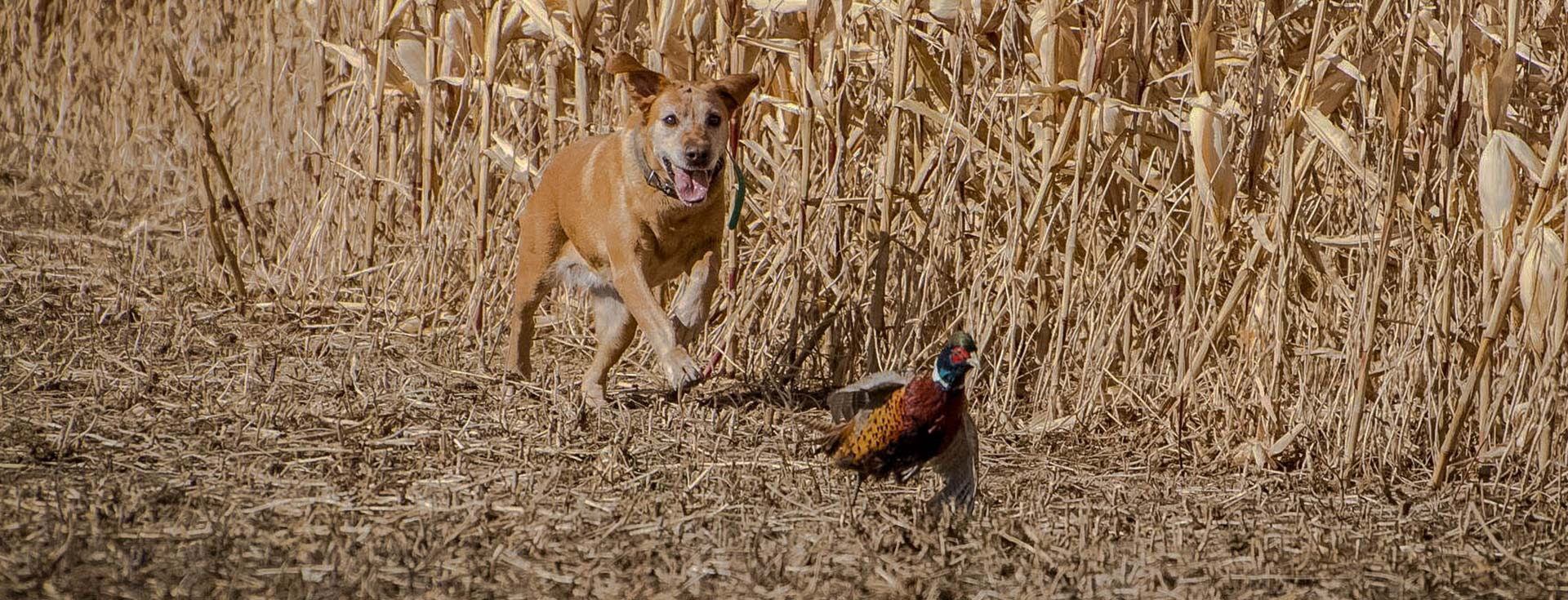 South Dakota Pheasant Hunting Lodges | Rieger Creek Lodge